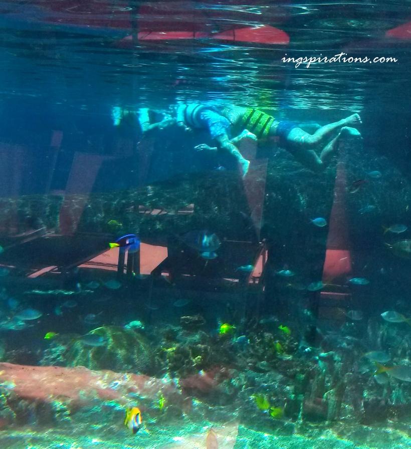 snorkeling adventure cove rainbow reef