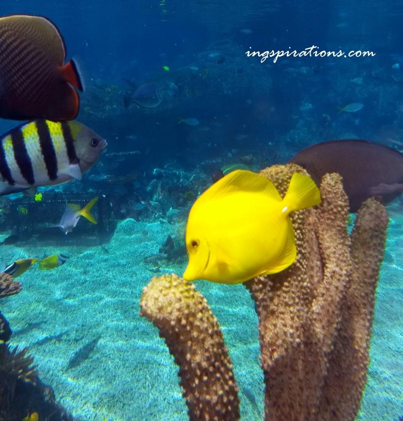 rainbow reef marine life sentosa