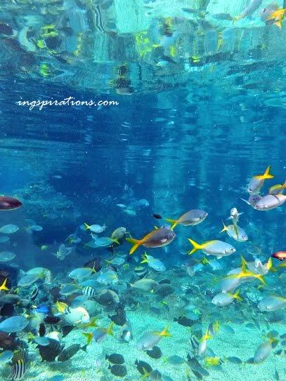 adventure cove snorkeling
