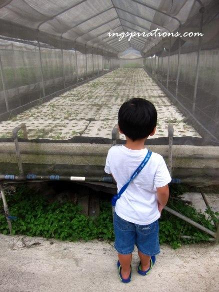 visit farms singapore