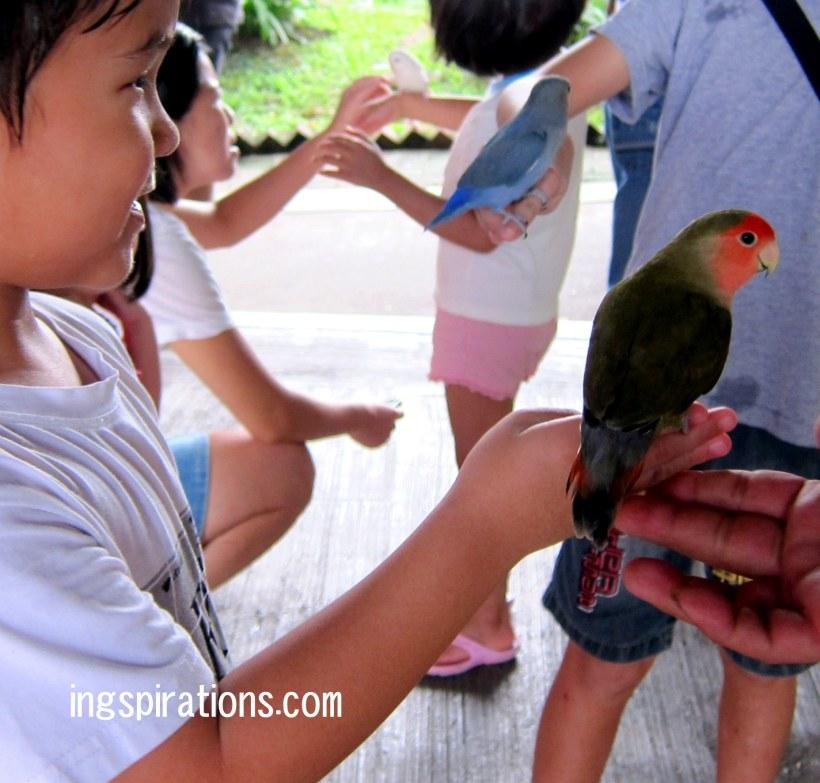 parrots farmart centre singapore