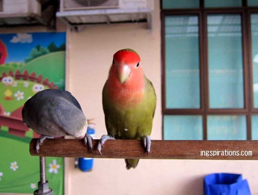 parrots farmart centre