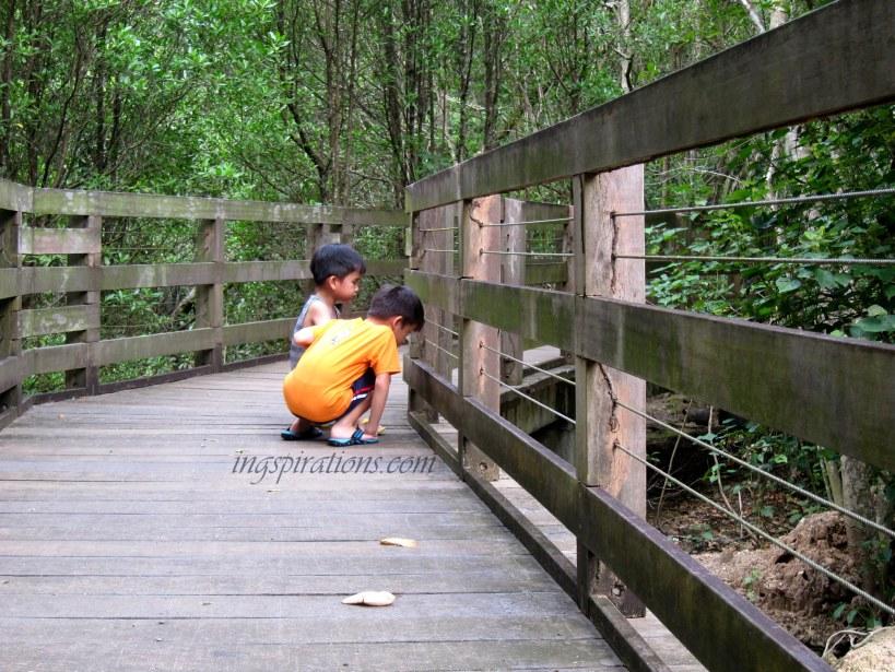 pasir ris mangrove swamp