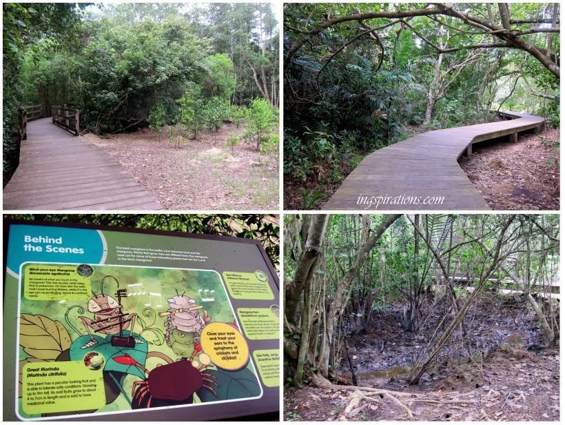 pasir ris park mangrove swamp map